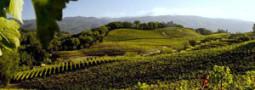 The Wine Cooperative presents Benziger Wines