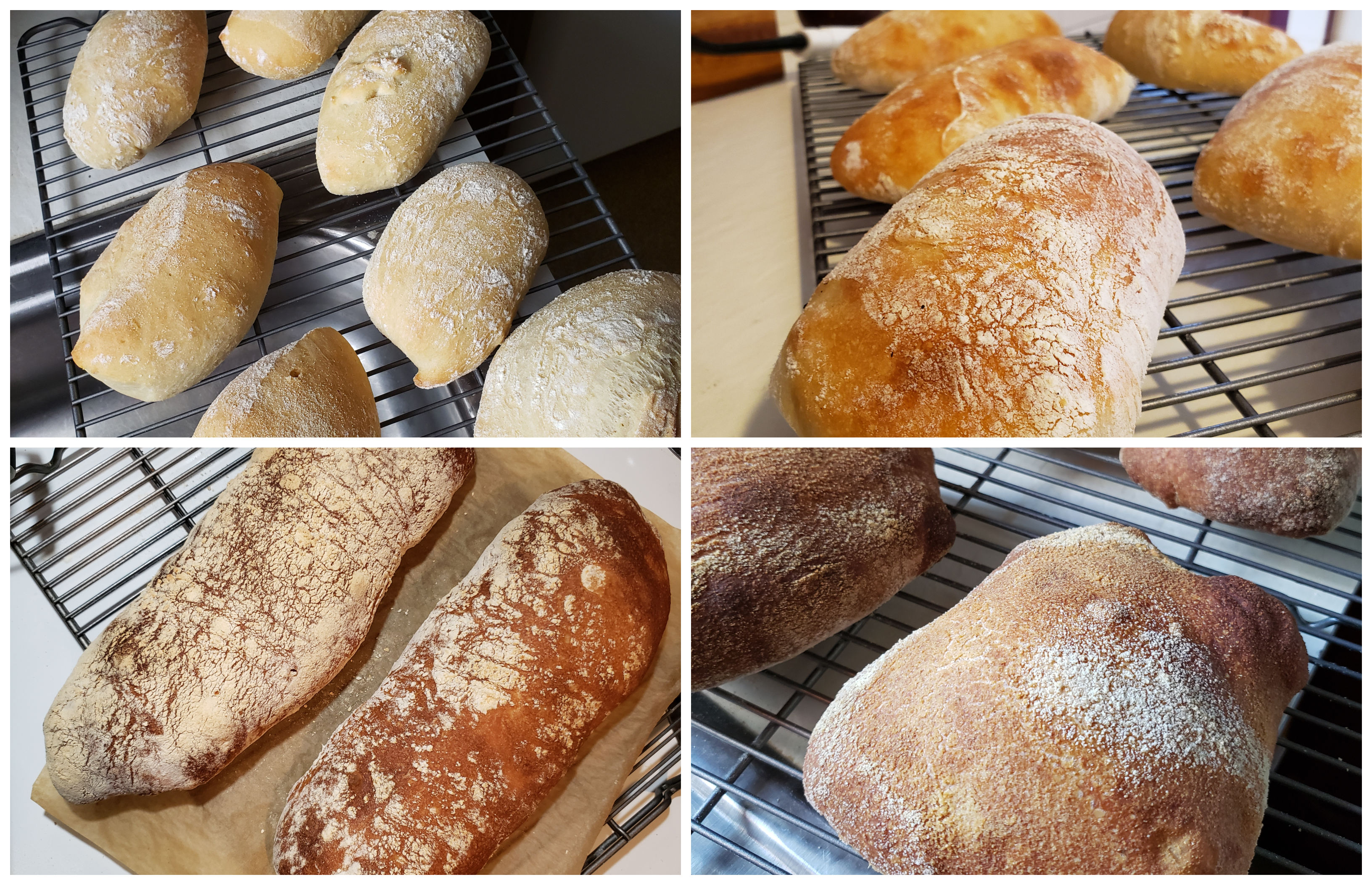 Different Ciabatta Baked Results (crusts)